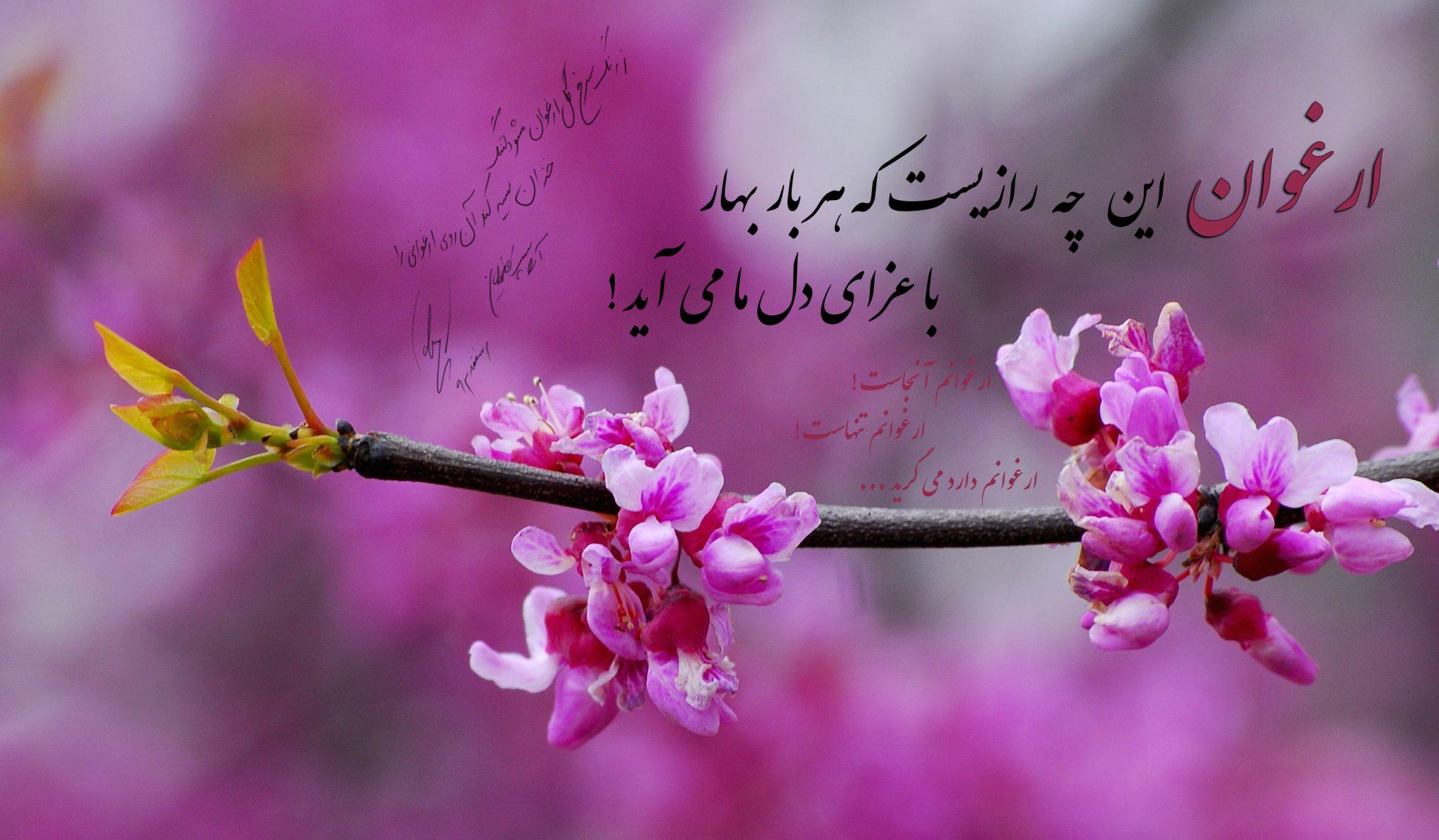ارغوان این چه رازیست که هر بار بهار با عزای دل ما می آید